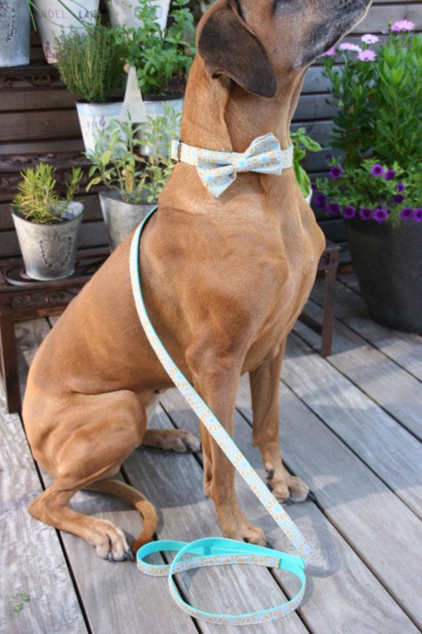 Hundehalsband Tropi handgefertigt Set mit abnehmbarer Schleife